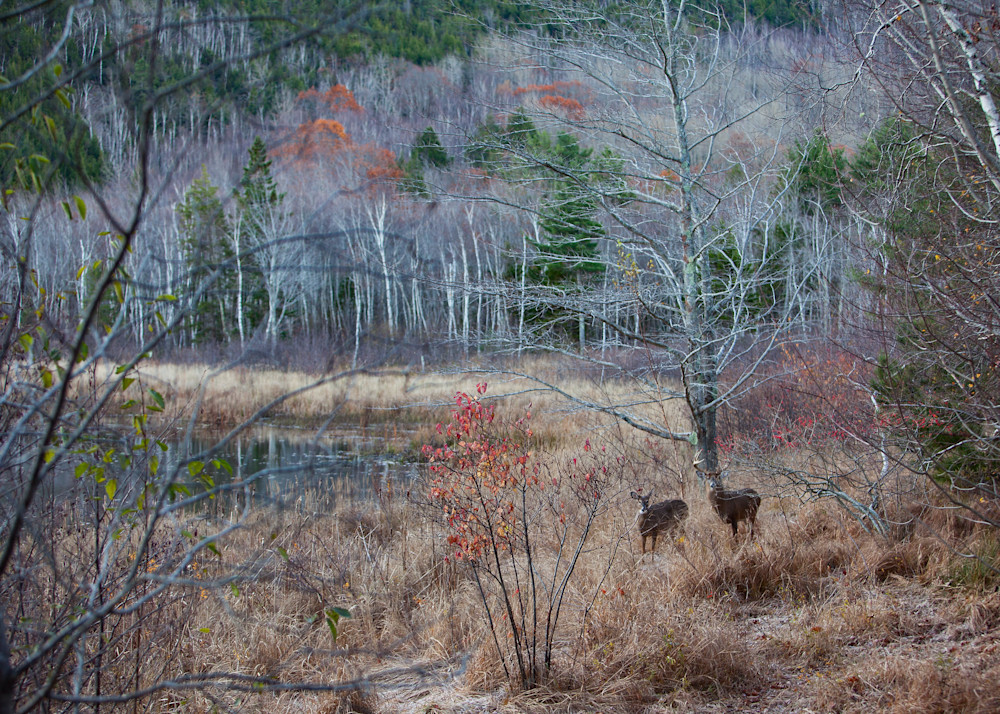 Acadia Mates Photography Art | Waterstreet Guild