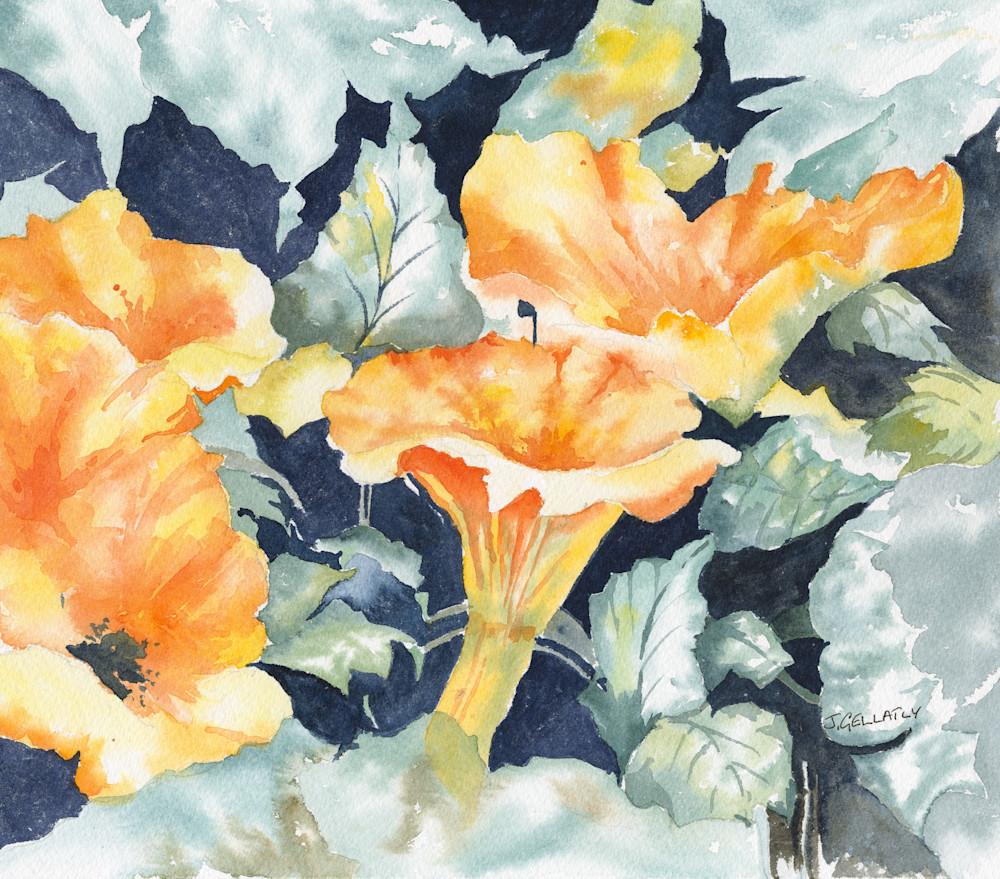 Jan Gellatly - Chantrelle Mushrooms