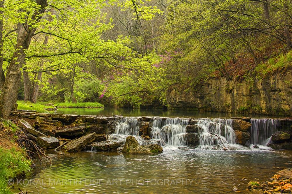 Waterfall Dogwood Photograph 8140   Waterfall Photography   Koral Martin Fine Art Photography