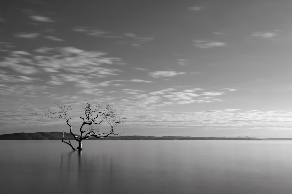 Mono Salamander Tree Sunrise - Salamander Bay Port Stephens NSW Australia