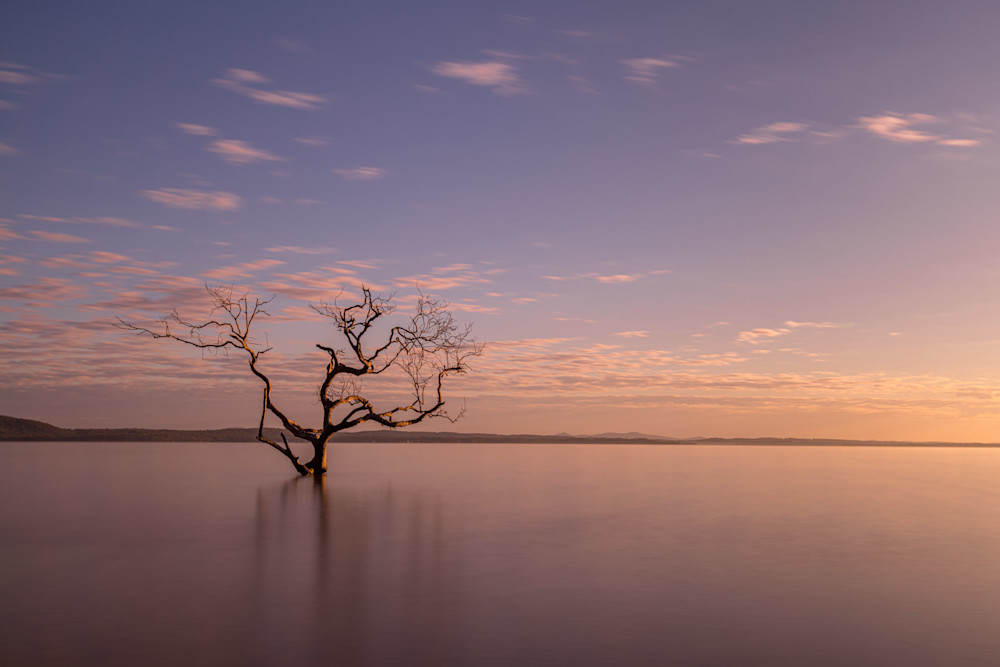 Salamander Tree Sunrise - Salamander Bay Port Stephens NSW Australia