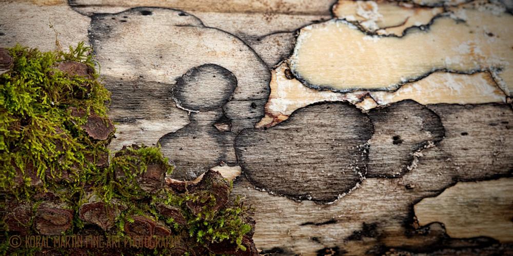 Bark and Moss Photograph 0712 | Macro Photography | Koral Martin Fine Art Photography