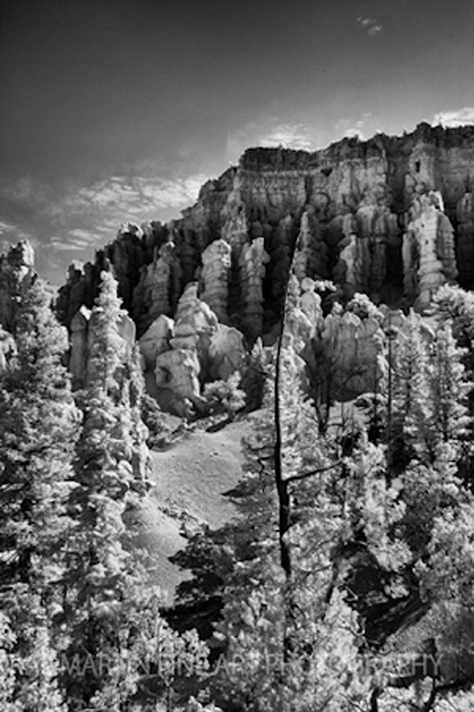 Infrared Bryce Canyontree5495  | Infrared Photography | Koral Martin Fine Art Photography