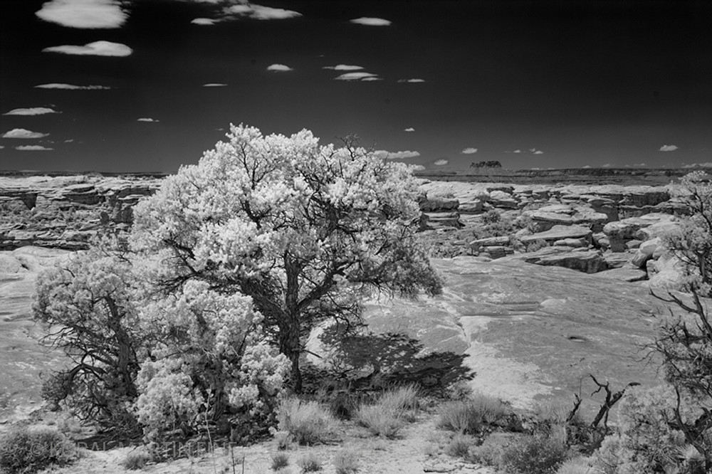 Infrared Canyonlands Tree Photograph 5685  | Infrared Photography | Koral Martin Fine Art Photography