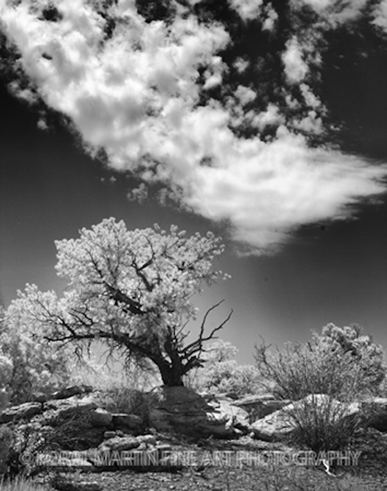 Infared Canyonlands Tree 5662    Photograph | Infrared  Photography |  Koral Martin Fine Art Photography