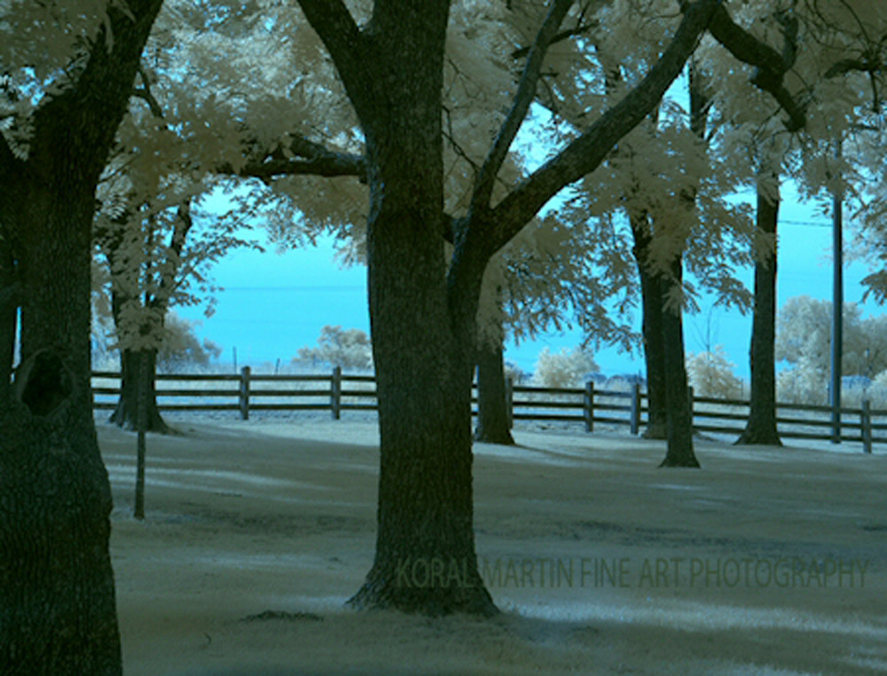 Infrared George Washington Carver Trees Blue  | Infrared Photography | Koral Martin Fine Art Photography