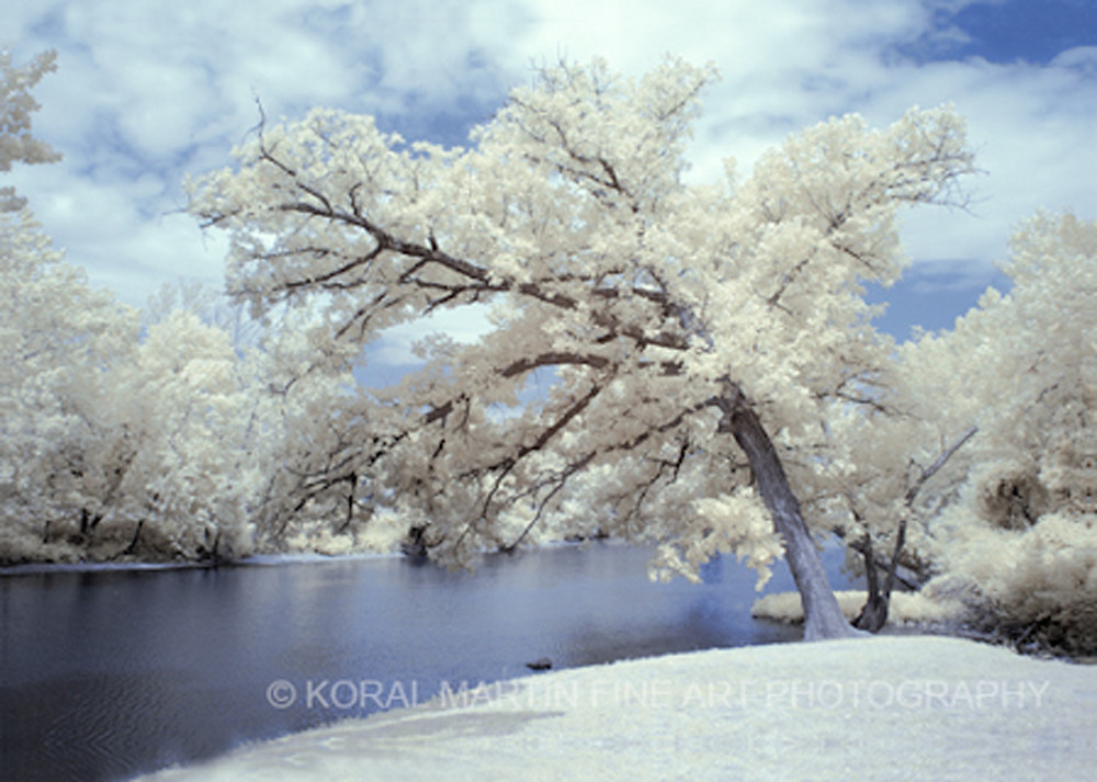Infrared Shoal creek  | Infrared Photography | Koral Martin Fine Art Photography