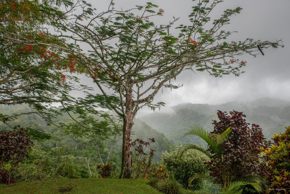 DP619 Pura Vida Gardens
