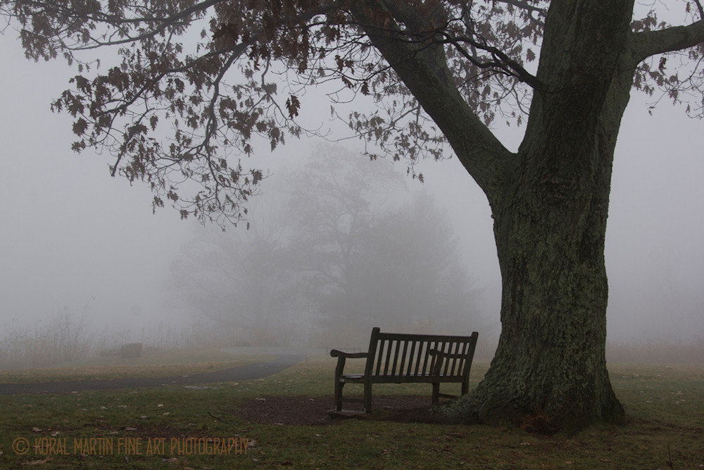 Foggy bench Photograph 5698 Skyline Drive  | West Virginia and Virginia Photography | Koral Martin Fine Art Photography