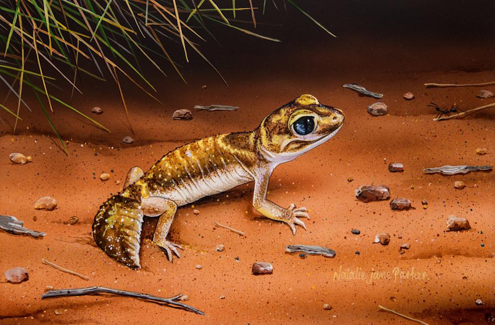 Desert Dweller - West Coast Three Lined Knob Tailed Gecko (Nephrurus levis) Natalie Jane Parker Australian Native Wildlife