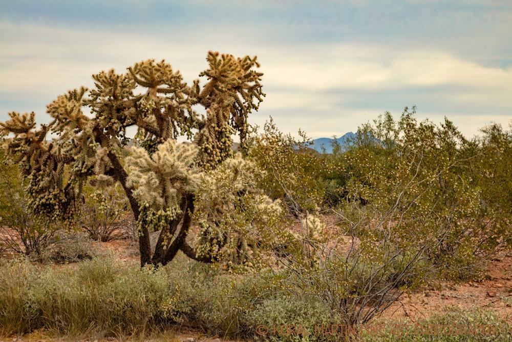 Apache Trail Photograph 1867 AZ LF  | Arizona Photography | Koral Martin Fine Art Photography