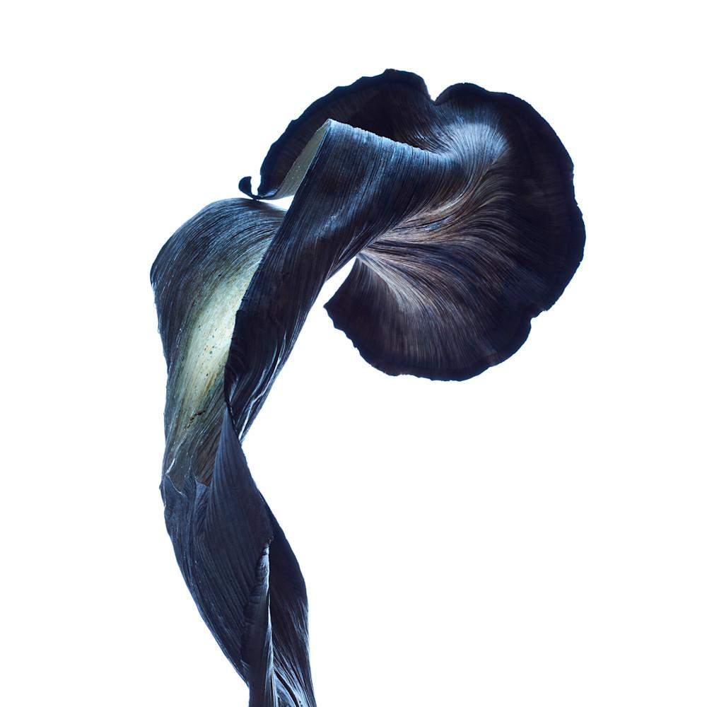 nebula - William Couture