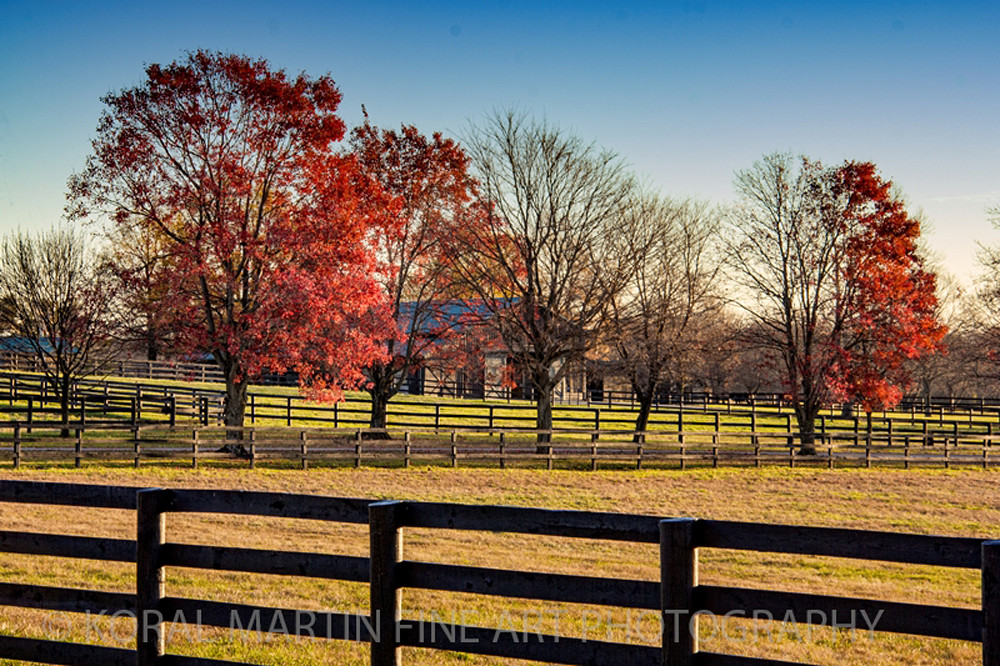 Kentucky Horse Farm 6263       Photograph | Kentucky  Photography |  Koral Martin Fine Art Photography