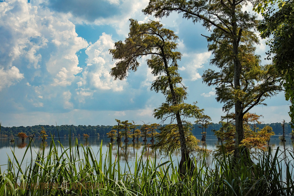 Cypress Trees Lake Photograph 94220 | Tennessee Photography | Koral Martin Fine Art Photography