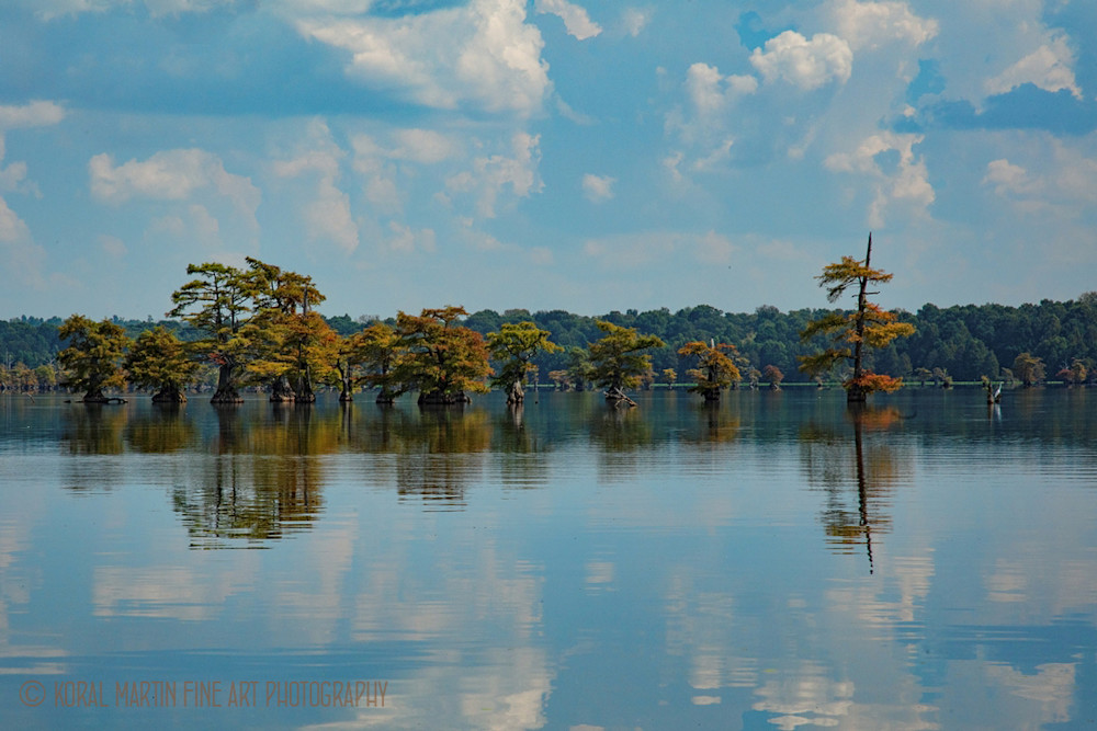 Cypress Trees Lake Reflection Photograph 94480 | Tennessee Photography | Koral Martin Fine Art Photography