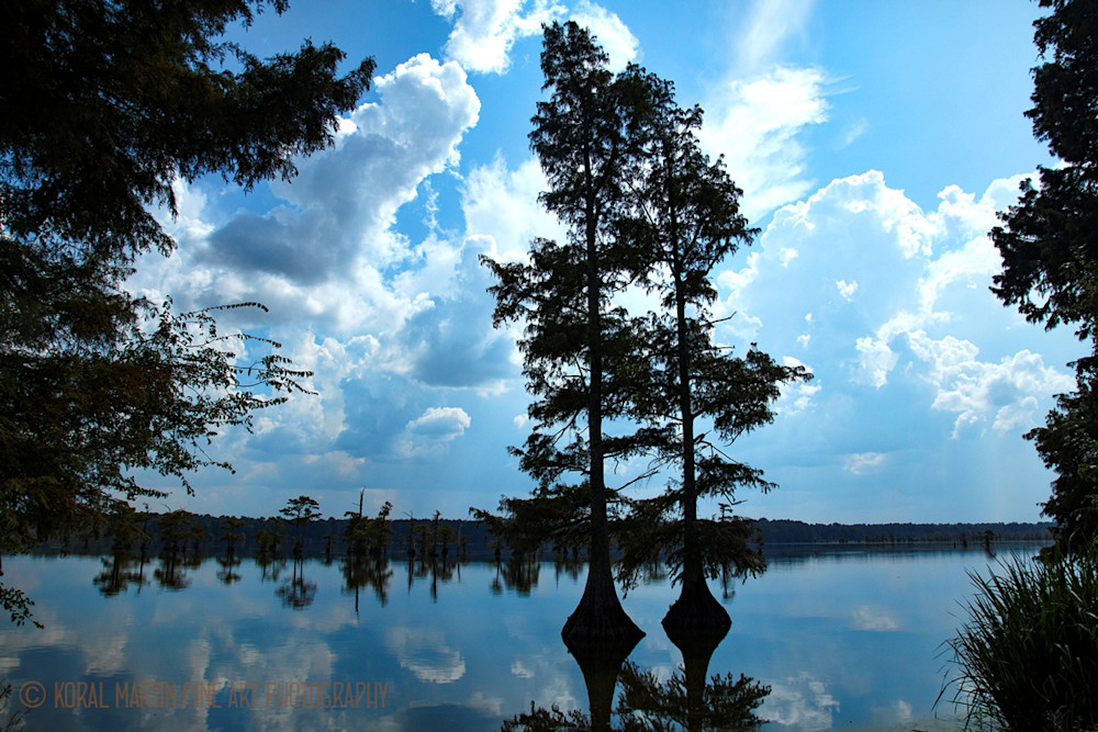 Cypress Trees Lake Reflection Photograph 94040 | Tennessee Photography | Koral Martin Fine Art Photography