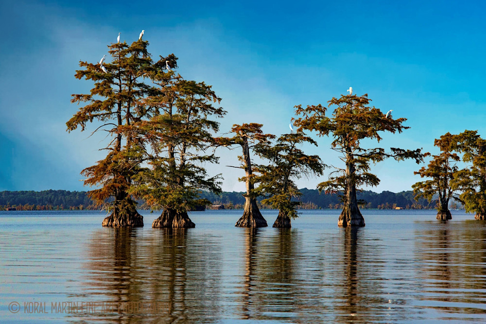 Cypress with Birds Photograph 89320   Tennessee Photography   Koral Martin Fine Art Photography