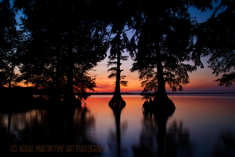 Cypress Trees Sunset Photograph 9132 C  | Tennessee Photography | Koral Martin Fine Art Photography