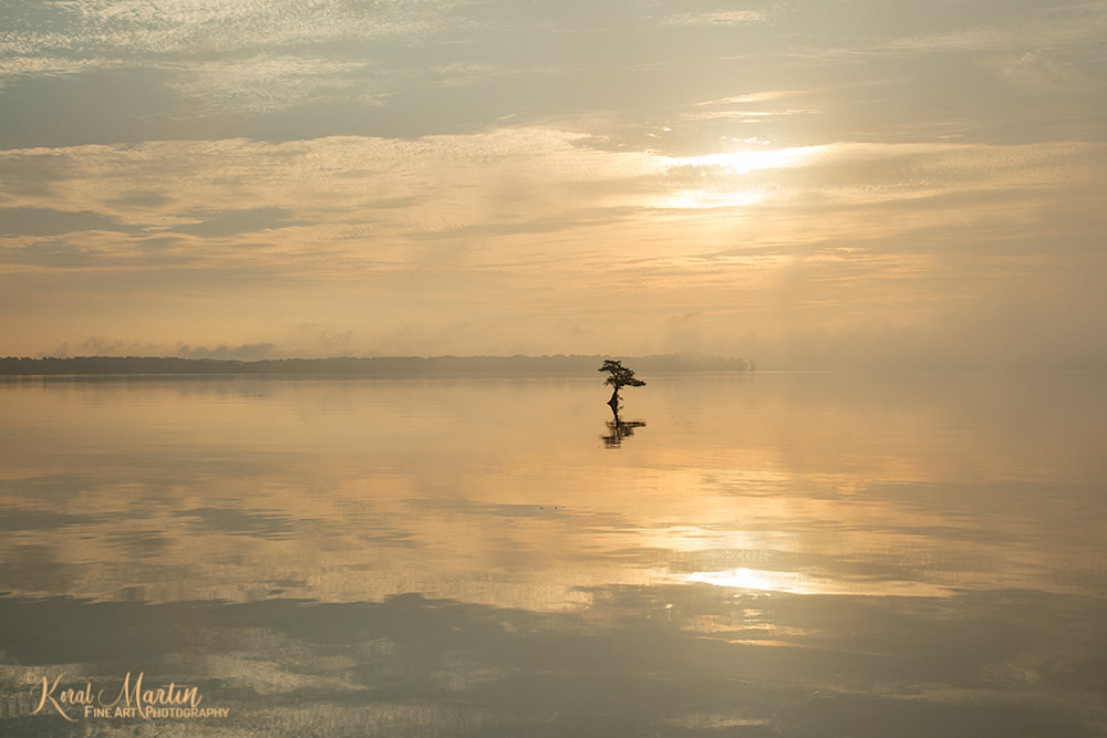 Muted Sunrise Reelfoot Lake Photograph 0442 C | Tennessee Photography | Koral Martin Fine Art Photography