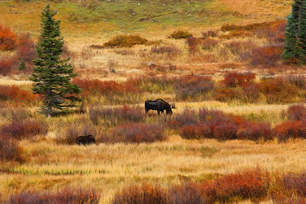 Moose print of photograph for sale as digital art by Maureen Wilks