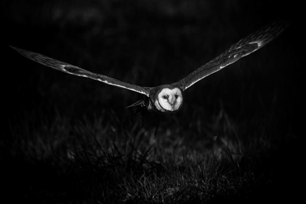 Barn Owl Photography Art | Colin Hocking Photography
