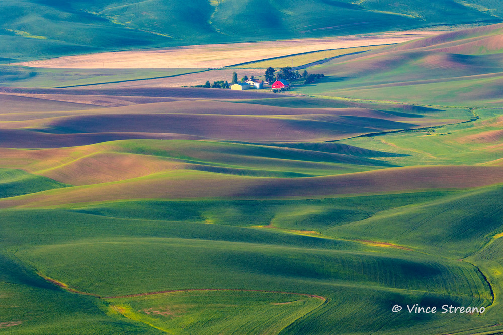 Afternoon light warms the rolling wheat fields of the Palouse in Eastern Washington