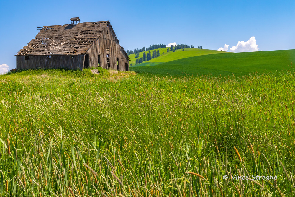 A rickety barn on the Palouse in Washington state