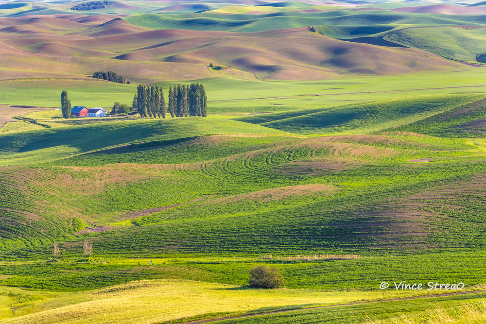 A picturesque farm on the Palouse in Eastern Washington.