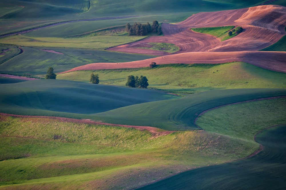 Early Morning in the Palouse by Rick Berk