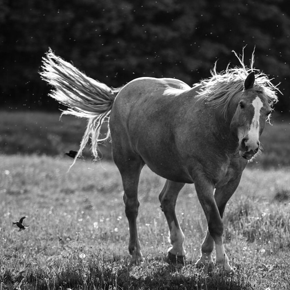 Horse Moves   Farm & Pasture Fine Art Prints   Nathan Larson Photography