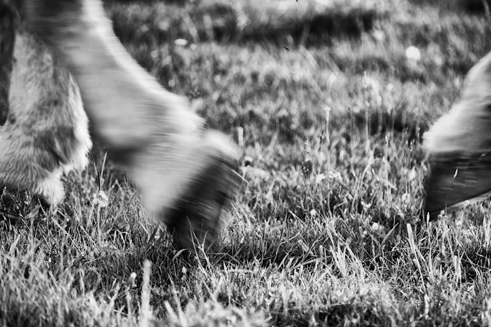 Horse Moves Vi Photography Art | Nathan Larson Photography