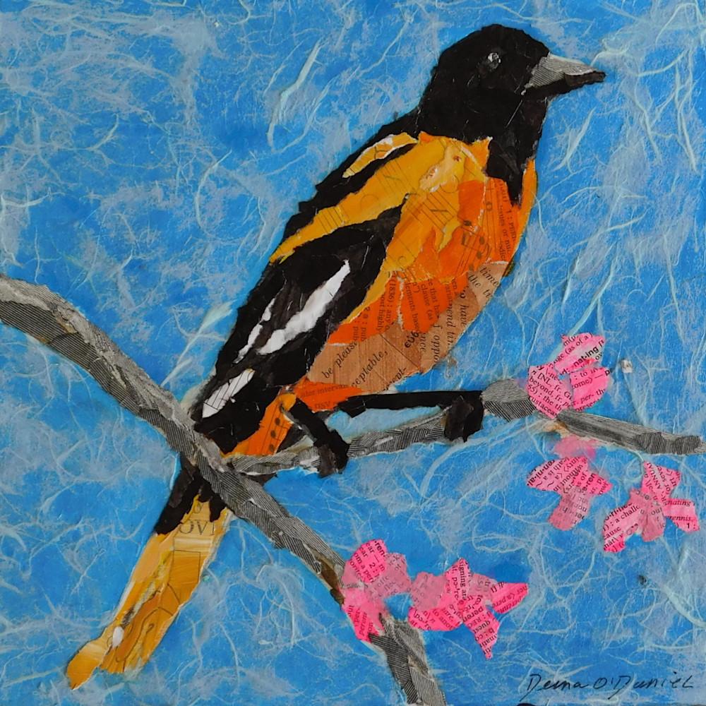 Baltimore Oriole Bird Collage