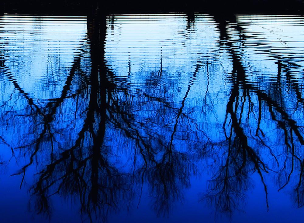 The Water Trees Art | Studio Malia