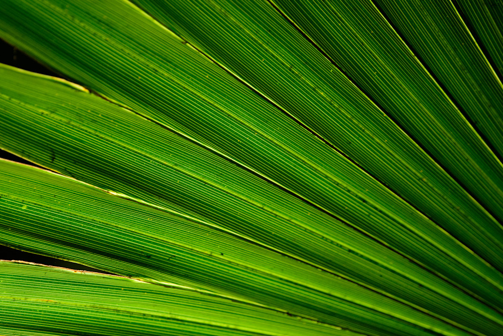 Palm Frond Photography Art | Colin Hocking Photography