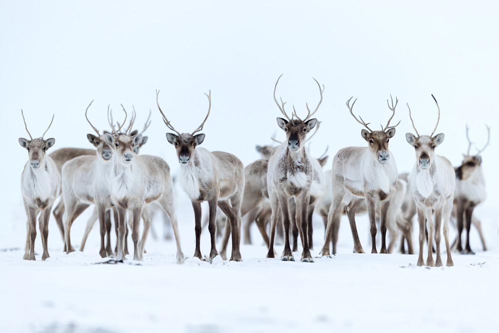 Deers for Fears