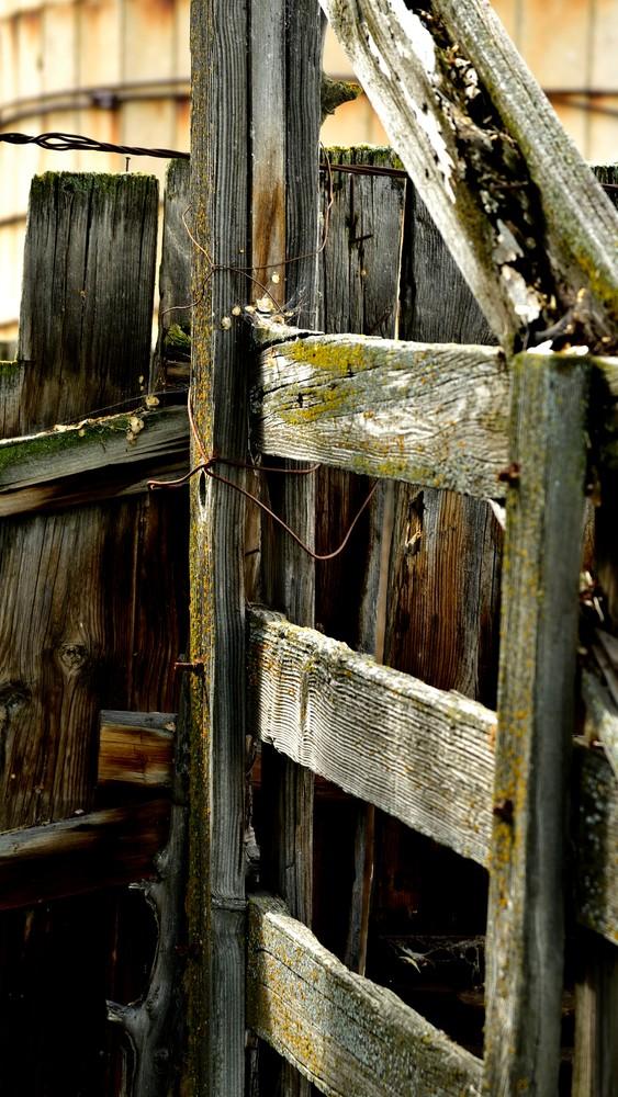 Wood Fence Green Moss