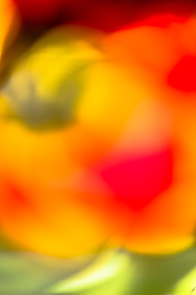Jasa Fine Art Gallery   5344 WHY YOU BLUSHING  By Jasa