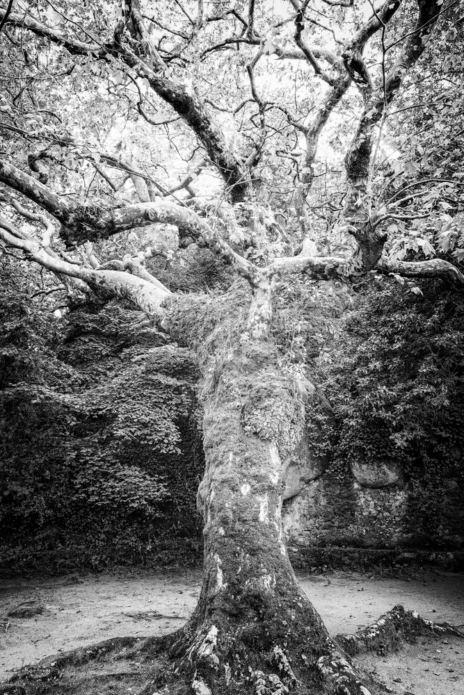 TREE #90
