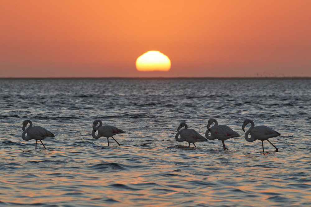 Walvis Bay Flamingo Sunset