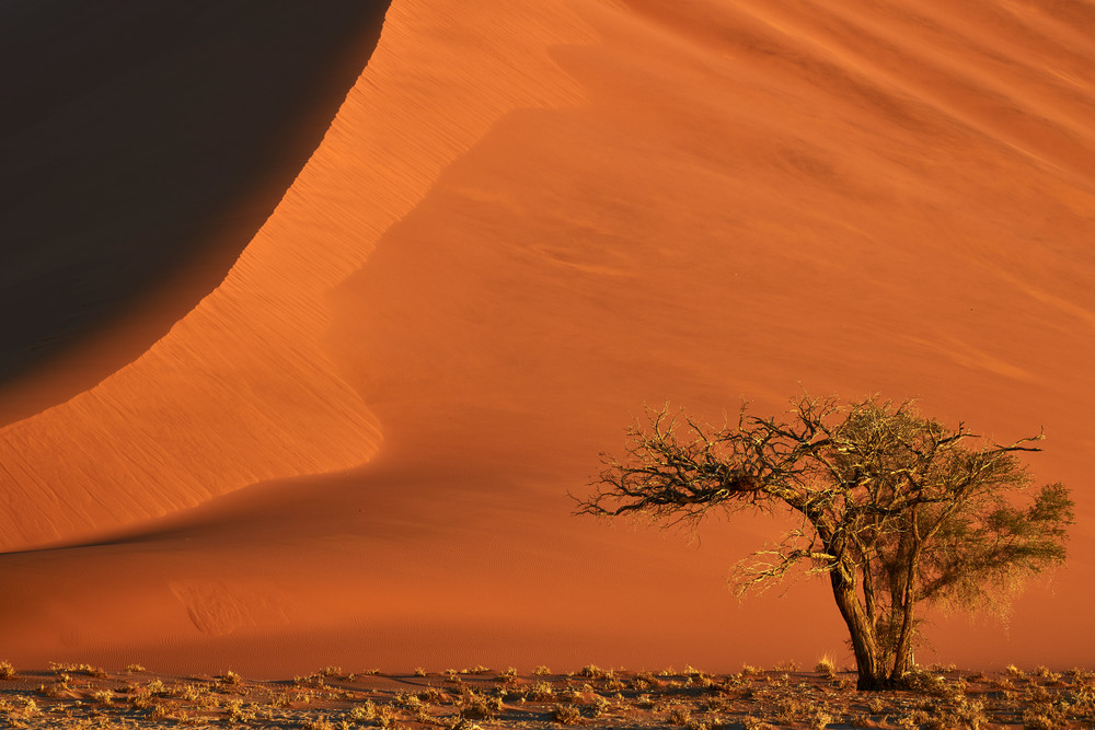 Fiery Sand Dune with Camel Thorn Tree
