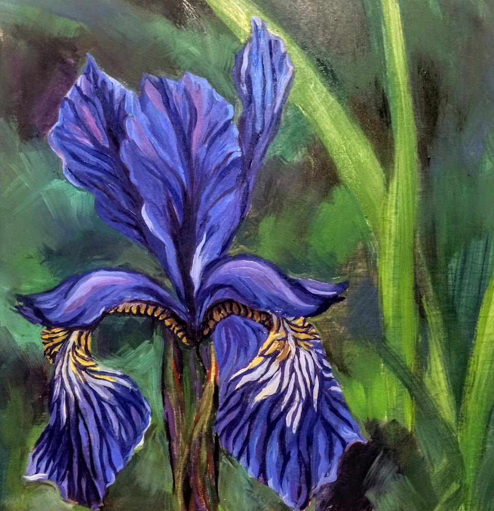 Alaska Wild Iris art print painting by Amanda Faith