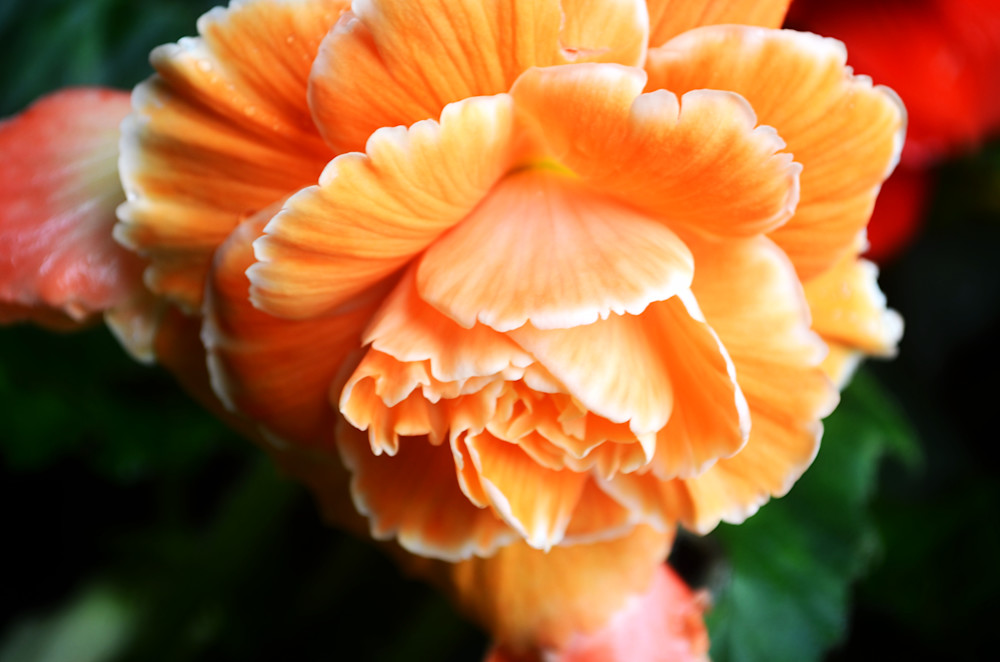 Orange is Today's Color