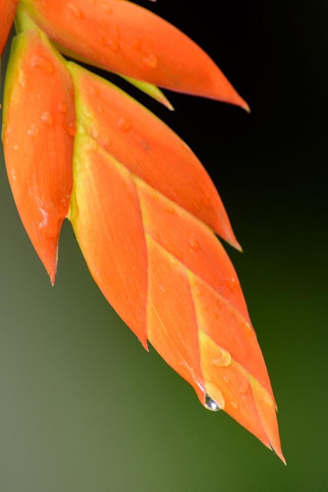Orange Photography Art | Colin Hocking Photography
