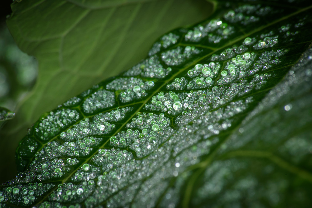 Droplets Photography Art | Colin Hocking Photography