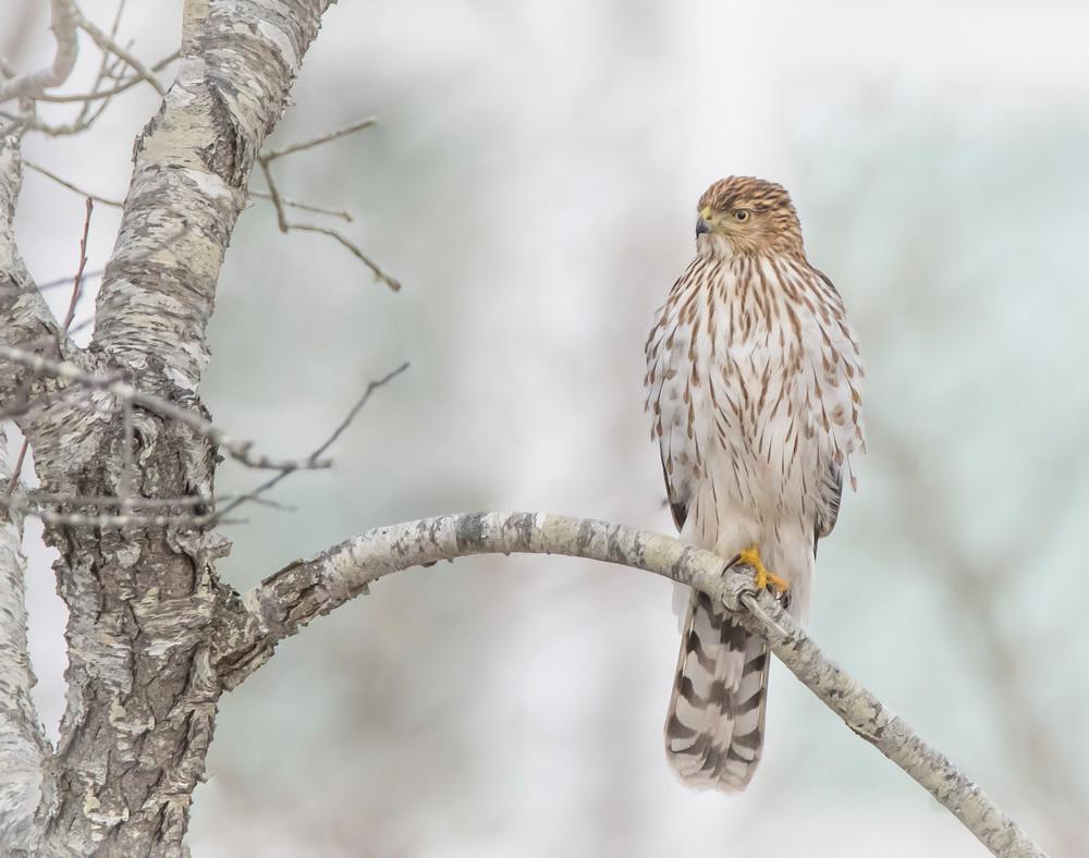 Winter Watch Art | Sarah E. Devlin Photography