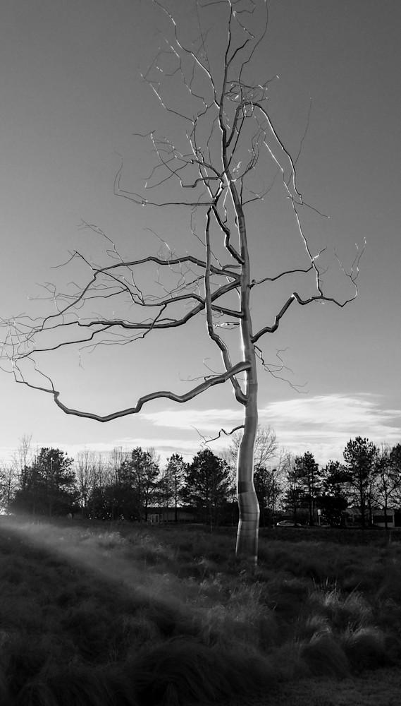 Nc Museum Metal Tree B&W Art   Patricia Franklin