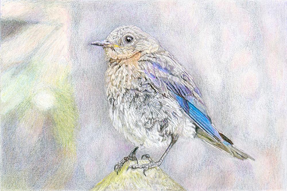 Bluebird At Edisto Art | Digital Arts Studio / Fine Art Marketplace