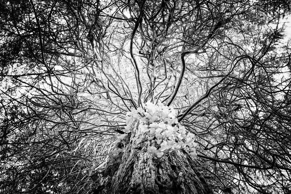 TREE #9