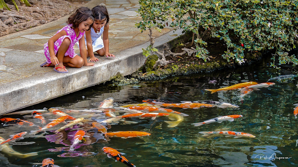 Children Play with Koi | Shop Prints | Robert Shugarman Photography