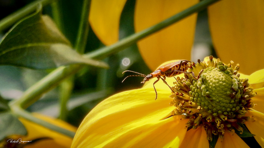 A Bugs Life | Shop Prints | Robert Shugarman Photography